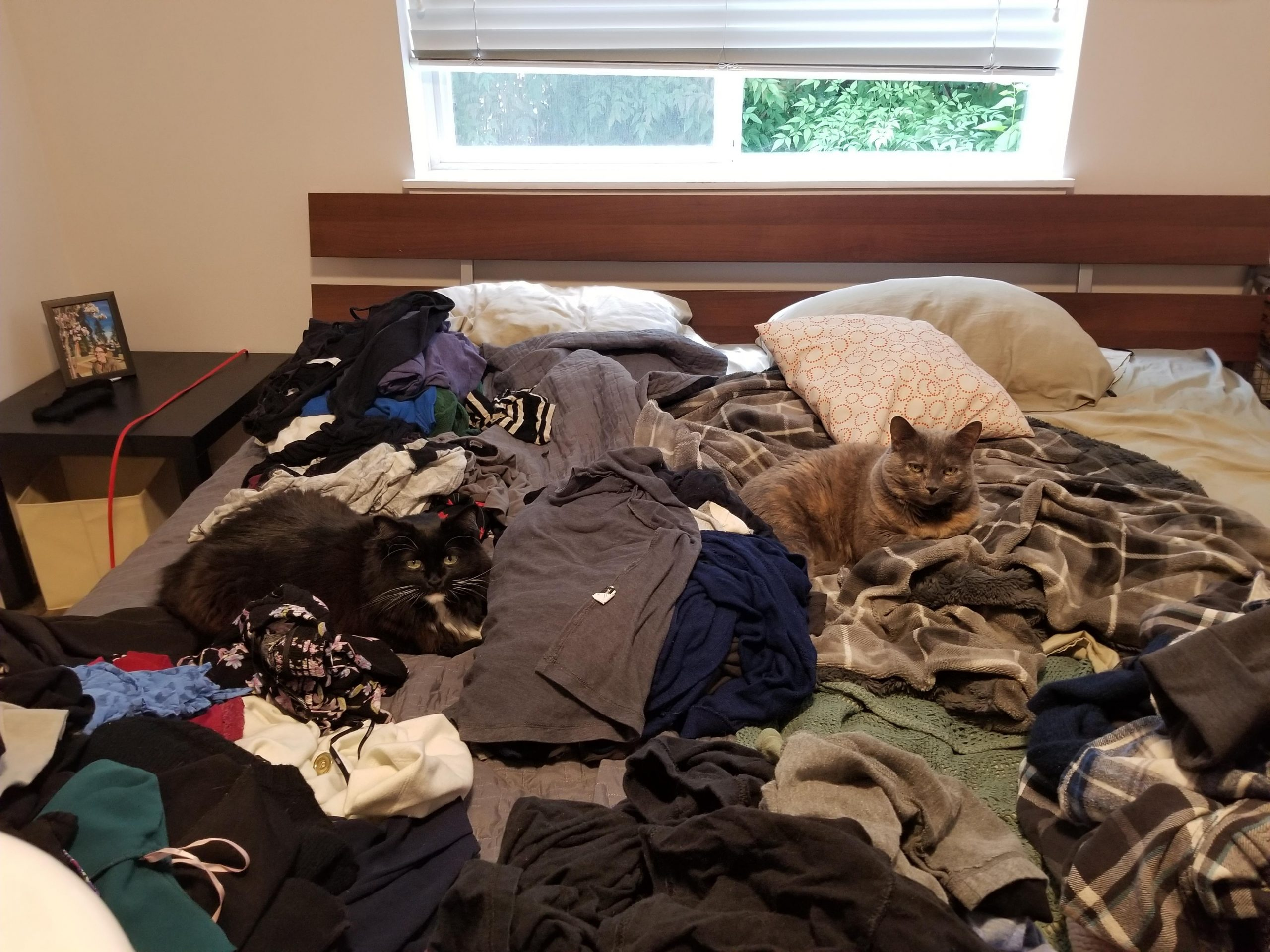 cats on bed surrounded by clothing